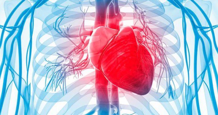 Enfermedades cardiovasculares, primer causa de muerte a nivel mundial.
