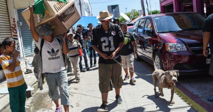 """""""Bolillo"""", el perro migrante que busca el sueño americano."""